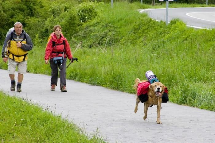 ¿Hacer el Camino de Santiago con tu mascota es posible? Consejos y recomendaciones