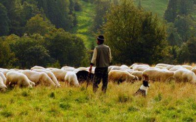 Leyendas del Camino: Los pastores de Estella