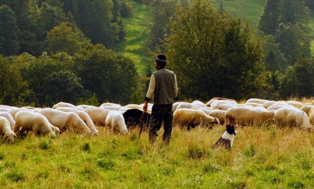 pastores de Estella
