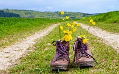 5 verdades y 2 mentiras sobre el Camino Francés
